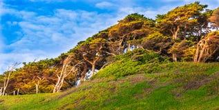 Exército de Cypress Fotografia de Stock