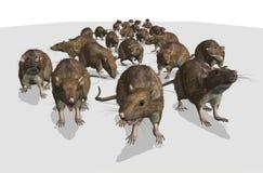 Exército dos ratos Fotos de Stock Royalty Free