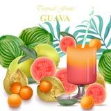Exótico suculento fresco do vetor realístico dos frutos da goiaba e da groselha do batido Imagem de Stock