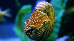 Exóticos hermosos ven pescados en un acuario Escena subacuática 3840x2160, 4K almacen de video