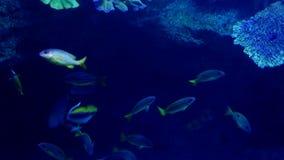 Exóticos hermosos ven pescados en un acuario Escena subacuática 3840x2160 almacen de metraje de vídeo