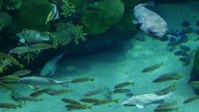 Exóticos hermosos ven pescados en un acuario Escena subacuática, 3840x2160 metrajes