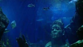 Exóticos hermosos ven pescados y un tiburón en un acuario Escena subacuática 3840x2160 almacen de video