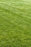 Exactly trimmed grass. Evenly trimmed lawn grass in the backyard Royalty Free Stock Images