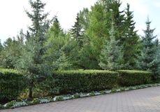Exakt klippte buskar längs gränden i staden parkerar arkivfoton
