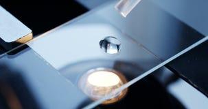 Exame da amostra do teste sob o microscópio no laboratório video estoque