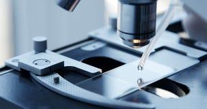 Exame da amostra do teste sob o microscópio no laboratório vídeos de arquivo