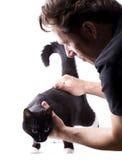Exame do gato Fotografia de Stock