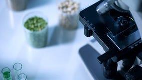 Examen des légumineuses sous le microscope, contrôle de qualité de nourriture, essai de pesticide images stock