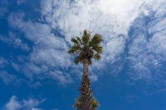 Examinar acima o fundo da natureza do dossel de palmeira foto de stock royalty free