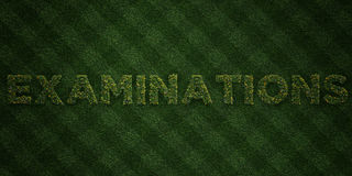 EXAMINATIONS - fresh Grass letters with flowers and dandelions - 3D rendered royalty free stock image Royalty Free Stock Photography