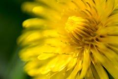 Examinez le Sun Image stock