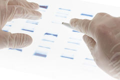 Examing DNA transparency. Researcher examining DNA sequence transparency slide stock images