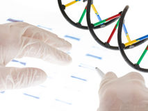 Examing DNA transparency. Researcher examining DNA sequence transparency slide royalty free stock image