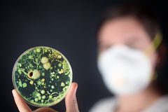 Examining bacteria in a petri dish. Examining growing bacteria in a petri dish Royalty Free Stock Photography