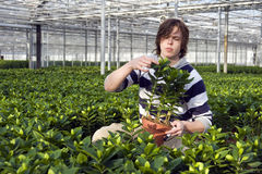 Examining potted plants Stock Photos