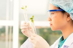 Examining sprouts Stock Image