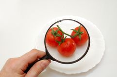 Examining tomatoes. Hand holding magnifying glass - examining healthy food, conceptual photo Stock Images