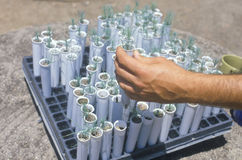 Examining tree seedlings Stock Photo