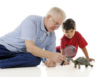 Examining the Turtle Royalty Free Stock Photography
