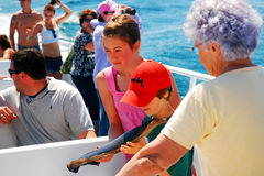 Examining Whale Baleen on a Whale Watching Cruise. A Family on a Whale Watch Cruise Examine Baleen from a Humpback Whale royalty free stock image