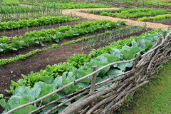 Example of farm to table garden. Farm to table garden, with several fruits and vegetables growing behind protection of rough-hewn wood fencing Royalty Free Stock Photo