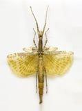 Examples locusts in Laboratory Stock Photos