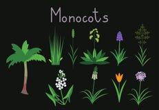 Exaples de monocots Imagenes de archivo