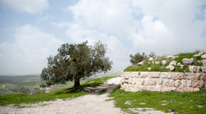 Ruinas antiguas de la arqueología de Sebastia Fotos de archivo