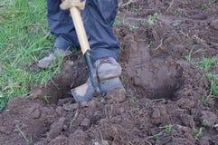 Excavación del hombre de tierra y preparación para plantar Imagen de archivo