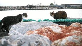 Excavador Working en el mar almacen de video