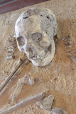 Excavated archaeological skull. Stock Photos