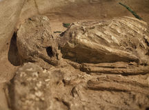 Excavated Human Remains Royalty Free Stock Photos