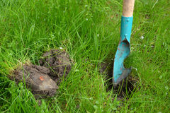 Excavation of a hole in soil for landing of seedling of flowers.  royalty free stock photography