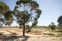 Excavations in Jilma Royalty Free Stock Photo