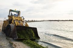 Excavator to clean algae on the beach Stock Photography