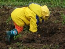 Excavatrice de pommes de terre Images libres de droits