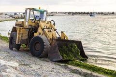 Excavatrice pour nettoyer des algues sur la plage Images libres de droits