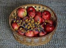 Excellent autumn harvest Stock Images