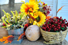 Excellent autumn still life with pumpkin. And sunflower Royalty Free Stock Image
