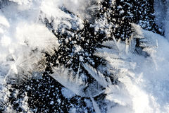 Excellent frost pattern on a water surface Stock Photos