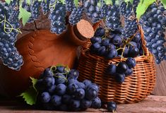Excellent Georgian wine royalty free stock images