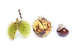 Excellent macro conker horse chestnut Stock Images