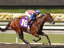 Excellent News Breaks Her Maiden. ARCADIA, CA - OCT 10: Guided by jockey Rafael Bejarano, two-year old Excellent News breaks her maiden at historic Santa Anita royalty free stock images