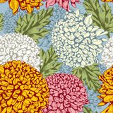 Excellent seamless pattern with chrysanthemum Royalty Free Stock Image