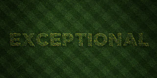 EXCEPTIONAL - fresh Grass letters with flowers and dandelions - 3D rendered royalty free stock image Stock Photos
