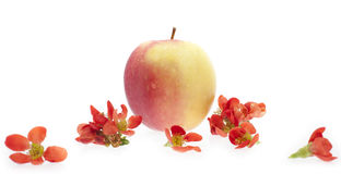 Exceptional red apple - isolated on white background Royalty Free Stock Images