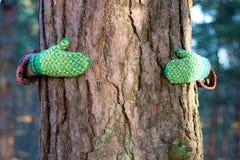 Excepto concepto del árbol: manos alrededor del pino Imagen de archivo libre de regalías