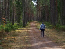 Powerwalk with sticks. Woman walking with sticks in a spruceforrest Stock Photography