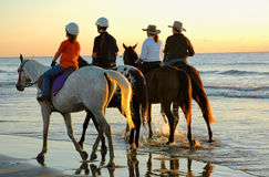Excercising horses at daybreak along the beach. As the sun rises above the horizon for the start of another day four horses are being excercised at the waters Royalty Free Stock Images
